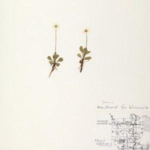 http://wisflora.herbarium.wisc.edu/collections/individual/index.php?occid=648881