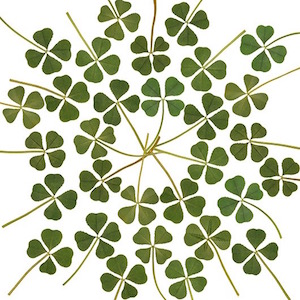 photo © from MustBuyItemShop: http://www.ebay.com/itm/Wholesale-30p-Real-4-Four-Leaf-Clover-Irish-Good-Luck-Charm-Wedding-Favors-Dry-L-/121644176483